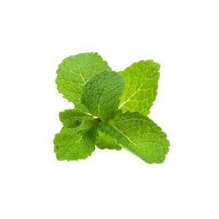 Organic Mint Leaves (100 Gms)